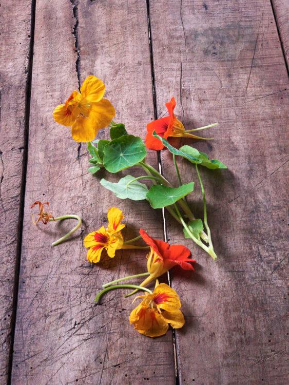 nasturtium-leaves-blossoms-edible
