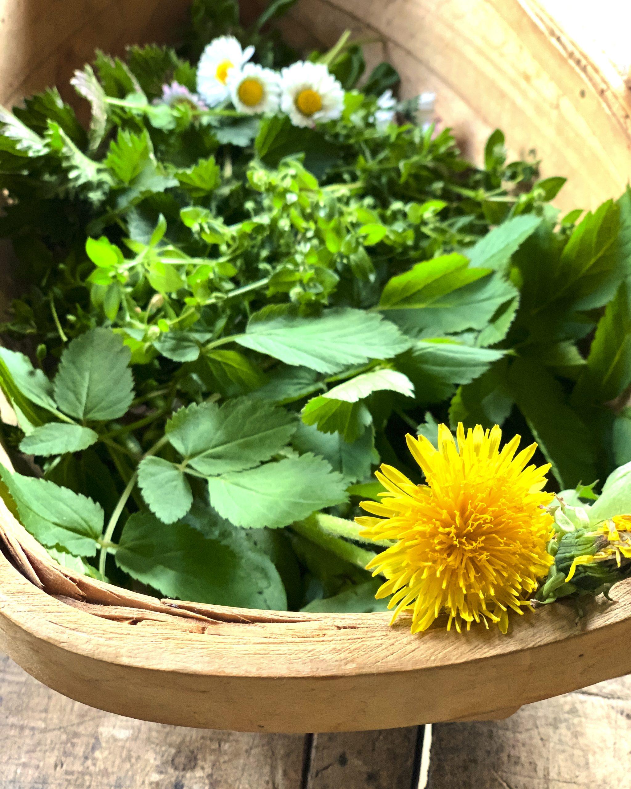 wildkraeuter-essbare-wildpflanzen-loewenzahn-pflanzenkueche-giersch-wildblumen-naturheilkunde